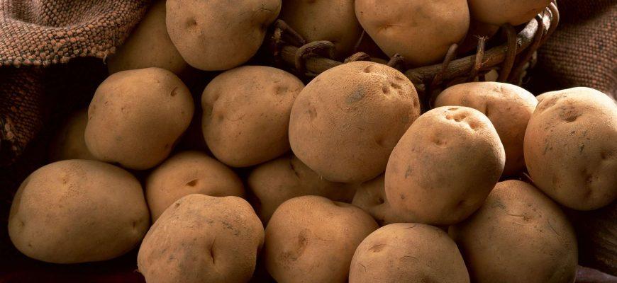 Россия: Ленобласть откажется от выращивания картофеля в пользу зерновых