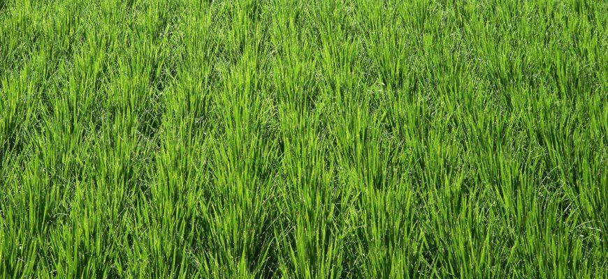 В Украине ожидается увеличение урожая озимых зерновых