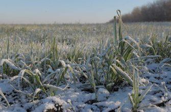 В Татарстане оценили затраты на посевную и состояние озимых