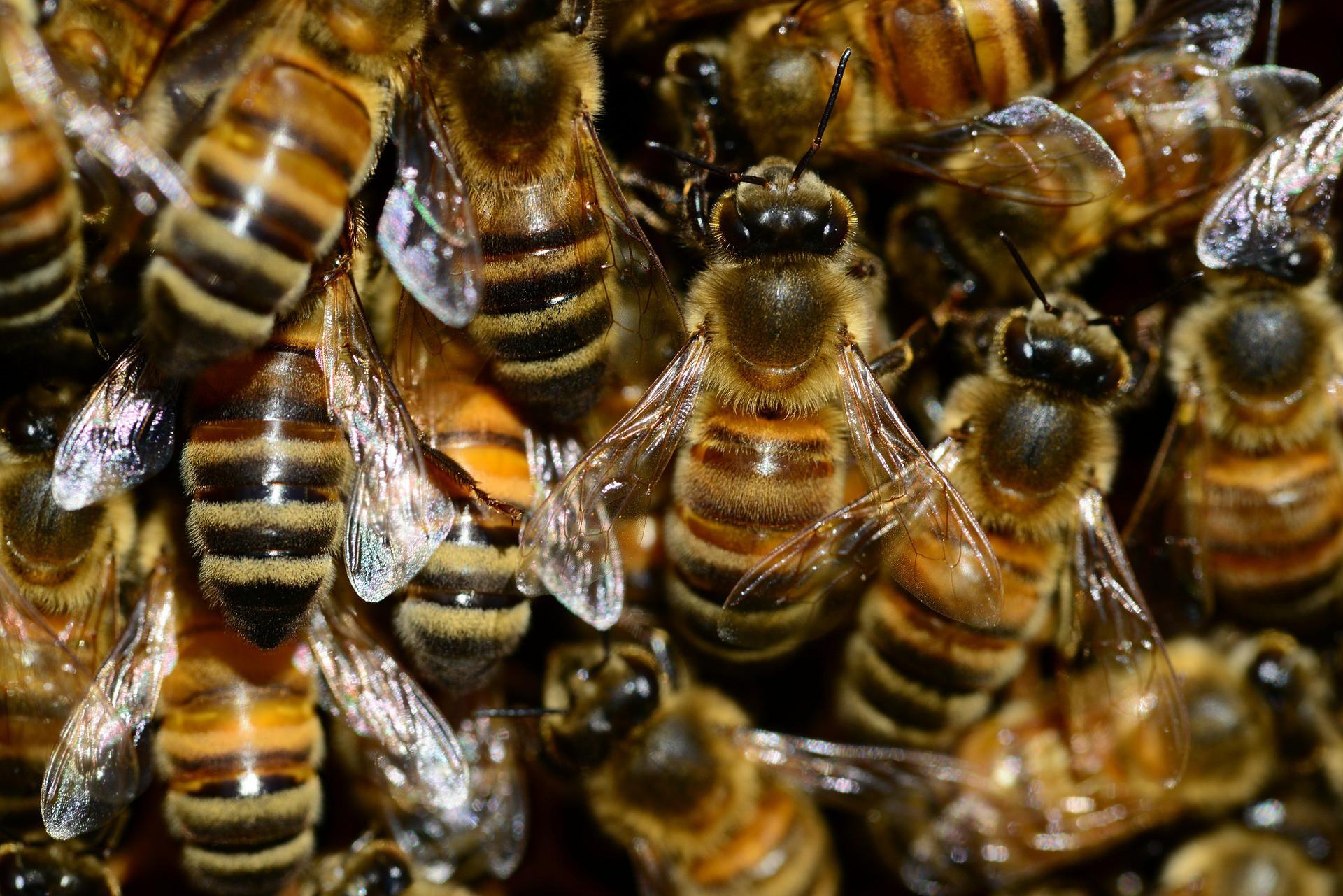 В Бразилии фермеры отравили полмиллиарда пчел