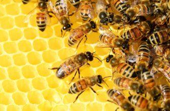 Как НАНОЦ поддерживает пчеловодов