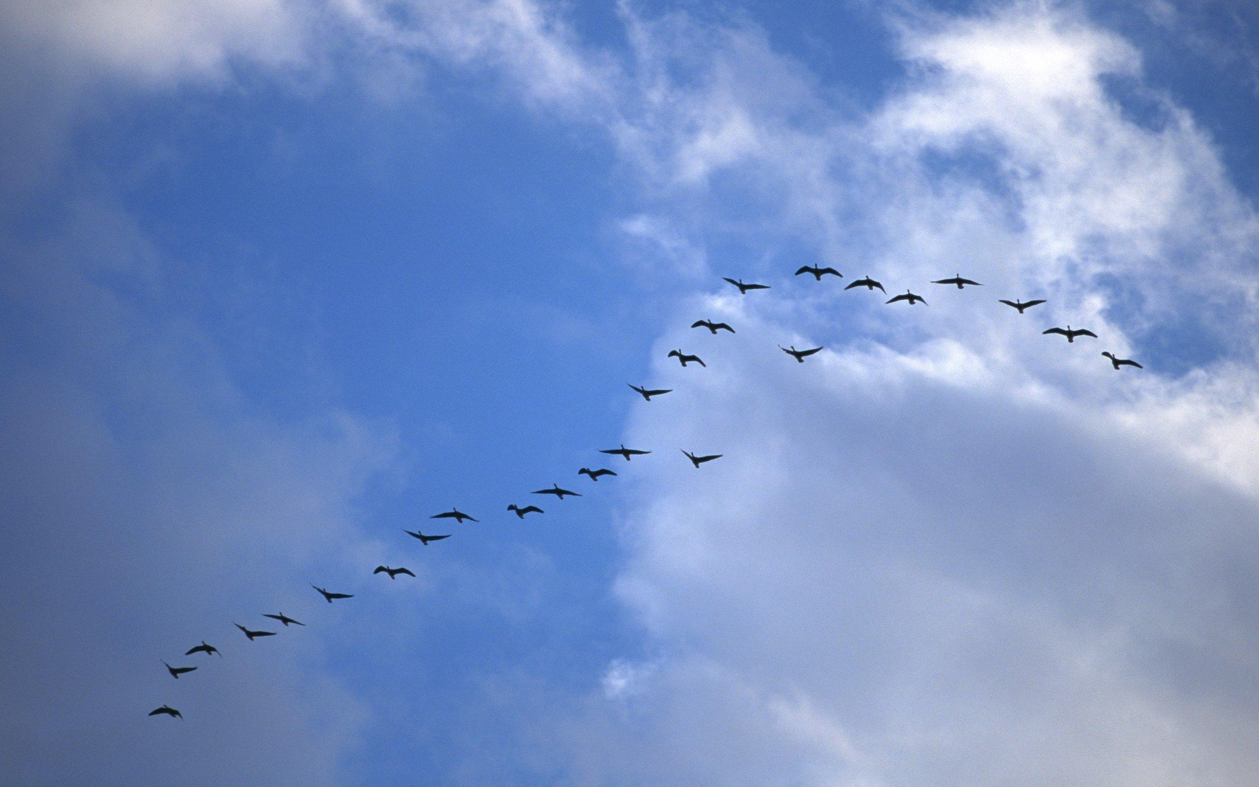 смыслу перелет птиц в картинках китайский почему-то