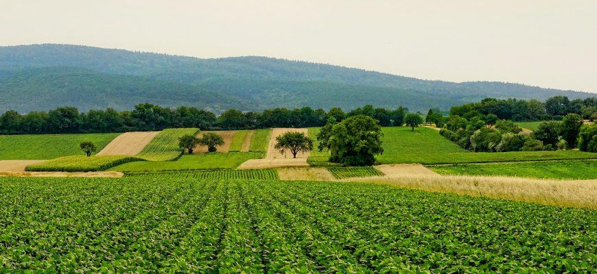 Кому выгоден «кривой» мониторинг сельхозземель?