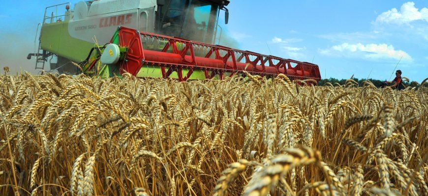 Мировой объем производства зерна в 2019/20 году вырастет на 2% - МСЗ
