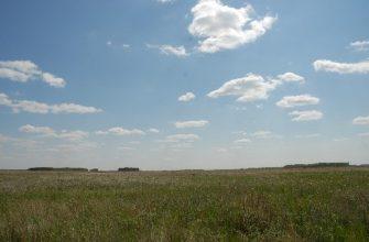 В Узбекистане 450 тысяч га сельхозземель оказались непригодными