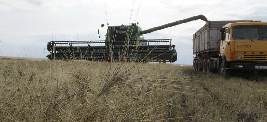 Аграрный сезон казахстанских крестьян не порадовал