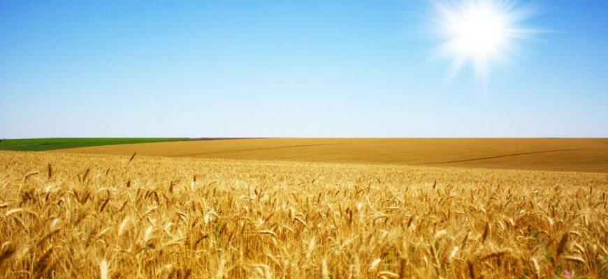 В 2019/20 МГ Китай купил у Франции 640 тыс. тонн пшеницы