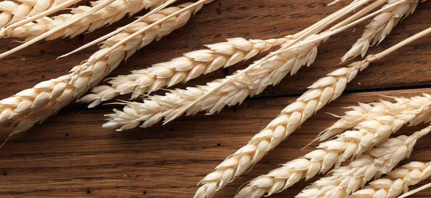 В понедельник пшеница в США развернулась вниз, а во Франции продолжила рост