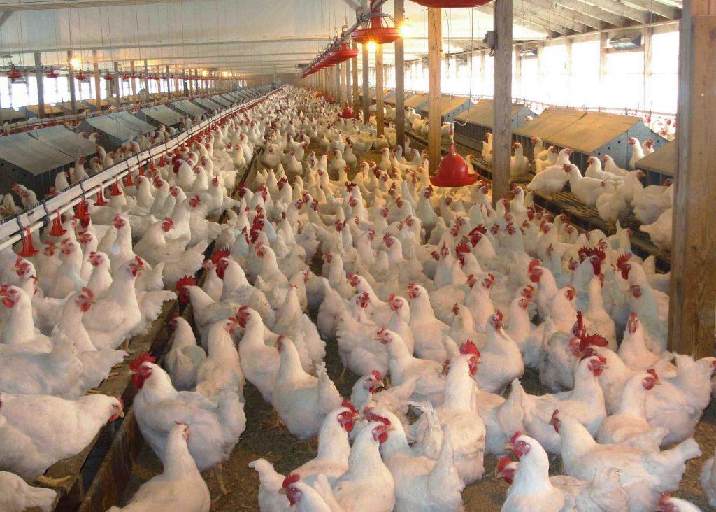 В селе на Востоке о остается карантин из-за гриппа птиц