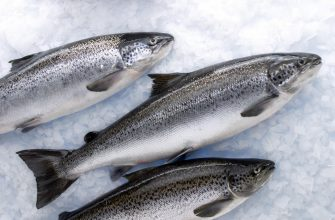 Прогноз по добыче лососей в России – 384 тысячи тонн