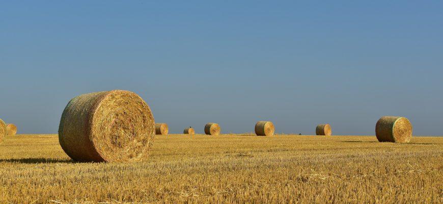 Сто тюков сена украли в крестьянском хозяйстве братья-подельники