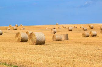В Казахстане стабилизировалась ситуация с кормами