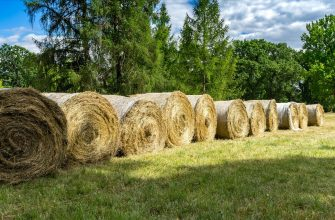 В Восточном Казахстане план по сенажу выполнен на 80%