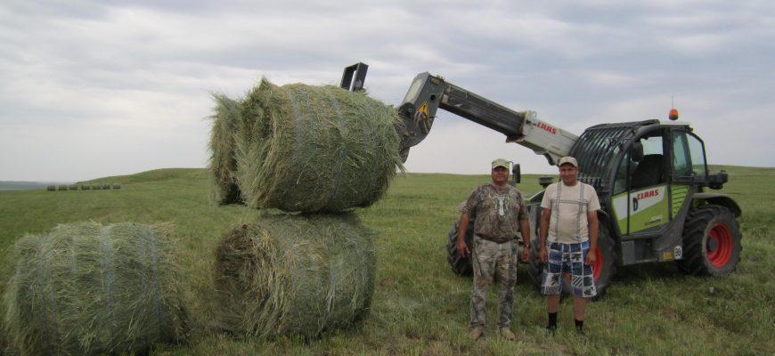 Казахстан: Без кормов - ни туда, ни сюда