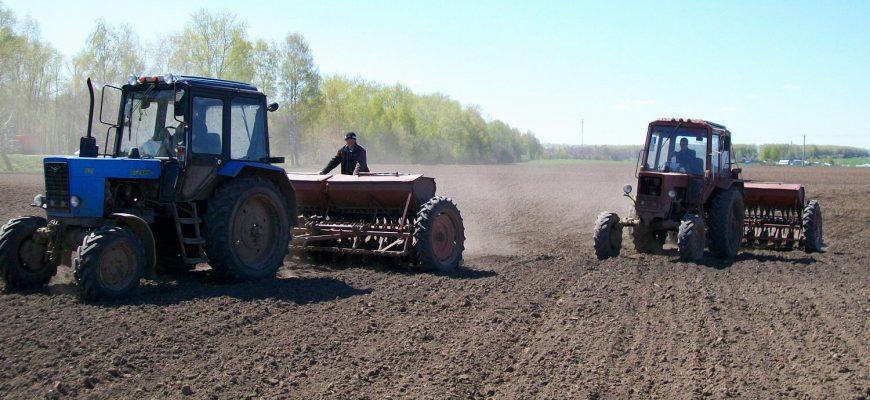 В Алтайском крае царица полей не только пшеница, но и масличные - министр