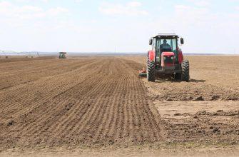 Зерновыми и зернобобовыми в Омской области займут 2 млн га