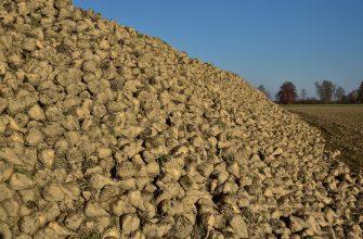 Рекордный урожай свеклы обрушил оптовые цены на сахар в России