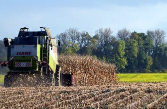 Урожай пшеницы в Германии на 13% превысит прошлогодний