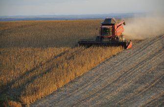 В Ульяновской области собрали первые полмиллиона тонн зерна урожая-2020