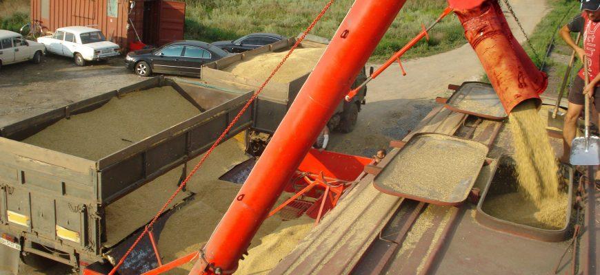 Ростовская область прогнозирует экспорт зерна на уровне рекордного 2018 года