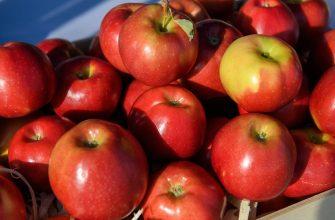 За полгода Казахстан импортировал фруктов на $27,4 миллионов