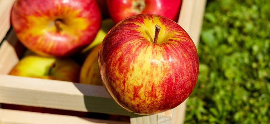 На Ставрополье начался сбор ранних яблок