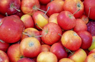 Садоводы Казахстана могут обеспечить страну собственными яблоками