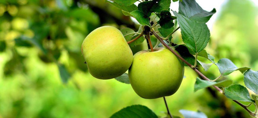 Местных яблок мало, на жамбылских прилавках преобладает импорт