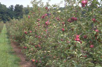 Россия: В Нижегородской области почти в два раза увеличат сбор плодов и ягод