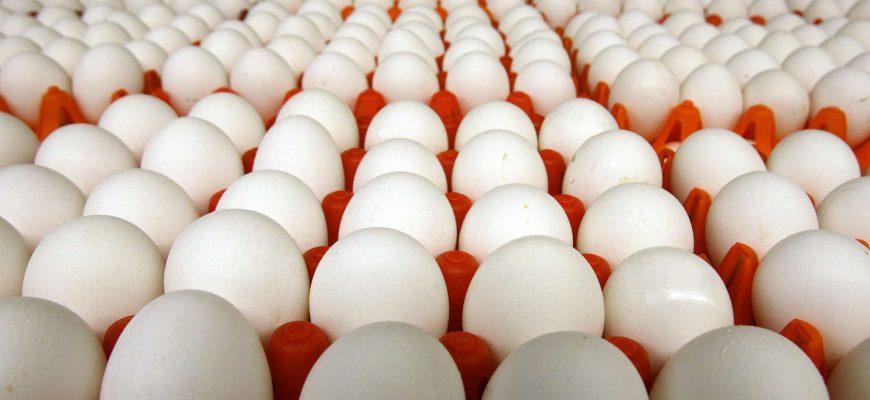 Россия будет экспортировать яйцо на африканский континент