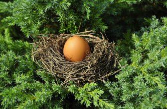 Птичьи яйца – живые капсулы жизни