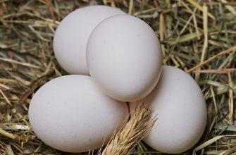 РФ запустит собственное производство спф-яйца