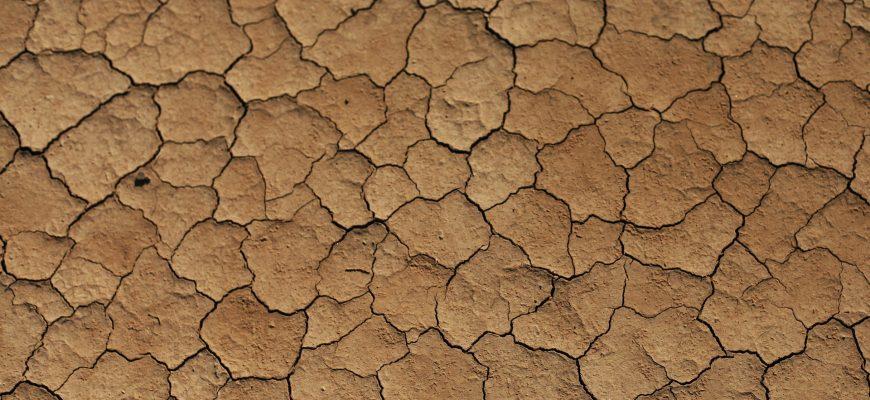 Развитие сельхозкультур на юге Поволжья и в Сибири происходит с серьезной задержкой - НСА