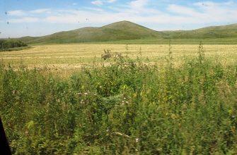 За 4 года Минсельхоз вернул в госсобственность треть неиспользуемых земель