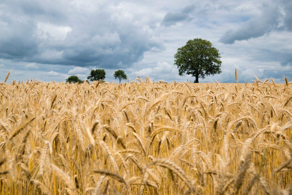 Экспортные цены на зерновые