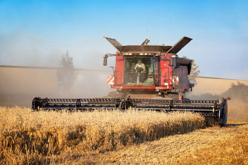 Пшеница с высоким содержанием клейковины возросла за год почти в 1,5 раза