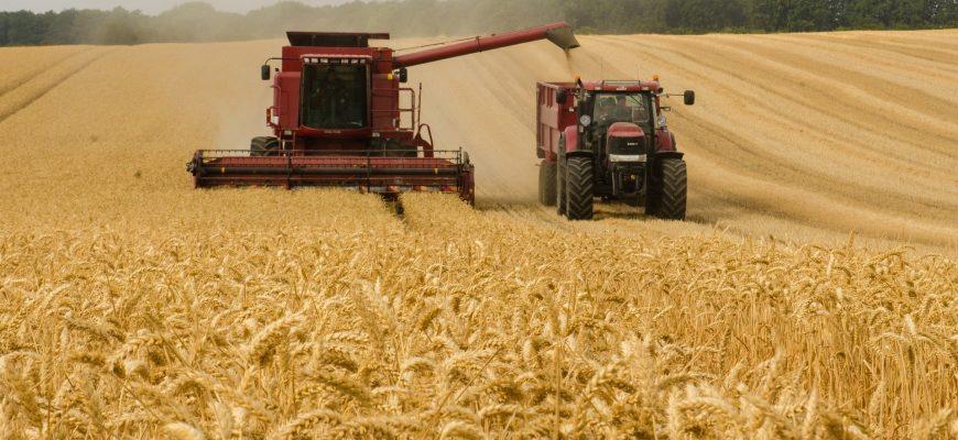 81% красноярской пшеницы нового урожая – 3-го класса
