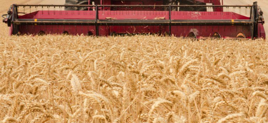 Производство пшеницы в мире составит 768 млн. тонн в 2019/20 МГ – МСХ США
