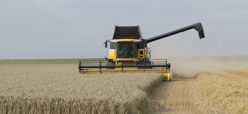 86% кубанского зерна признано продовольственным