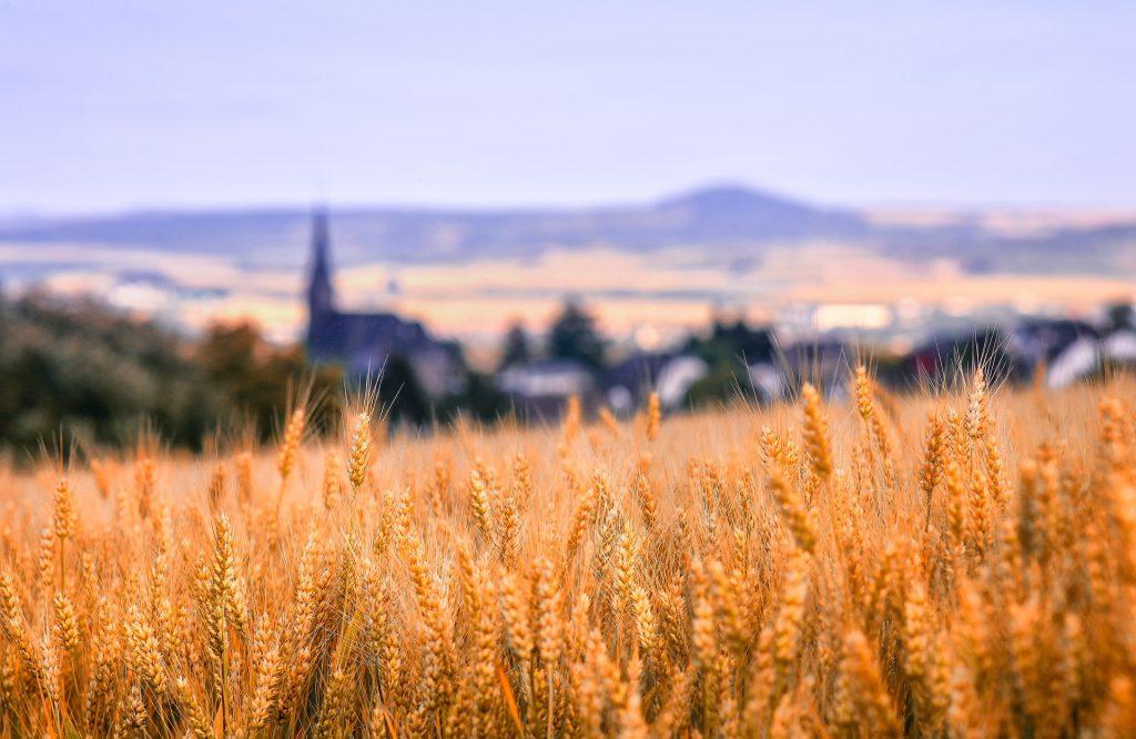 Неурожайный прошлый год сделал Казахстан крупным импортером зерна из России