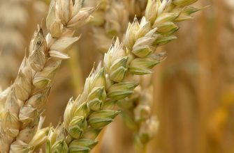 На ЕТС пшеница 3 класса подешевела на 6%, на Чикагской бирже - подорожала