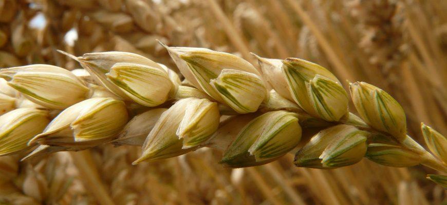 Сводная таблица цен на зерновые культуры и муку в тенге за тонну по Казахстану на 3.06.2019 года, в т.ч. НДС 12%