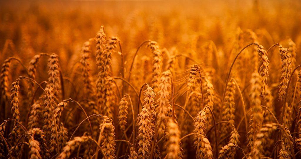 Сводная таблица цен на зерновые культуры и муку в тенге за тонну по Казахстану на 21.01.2020 года, в т.ч. НДС 12%