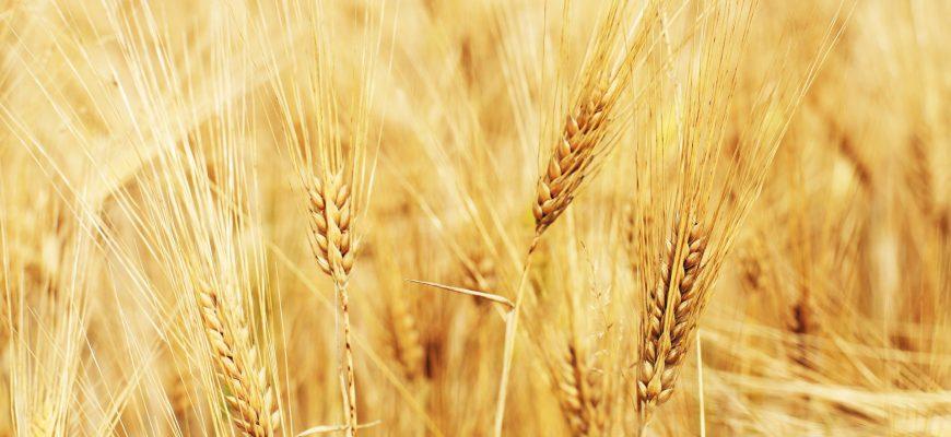 Только на Урале и в Сибири цены на зерно падают - НСЗ