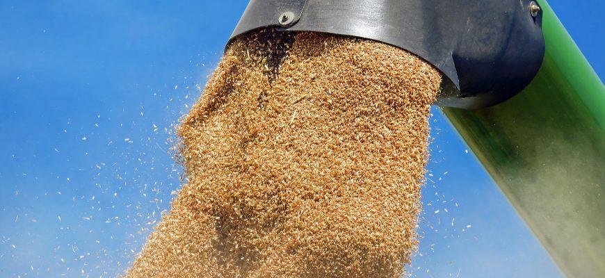 Россия делает шаги по восстановлению экспорта пшеницы во Вьетнам