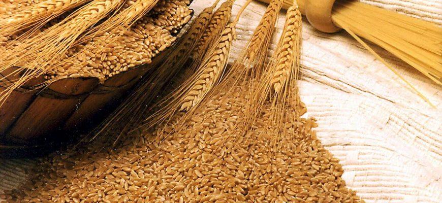 Снижение пшеничных котировок в августе оказалось однозначным и глубоким