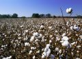 Котировки технических товаров из сельхозсырья завершили март сильным падением