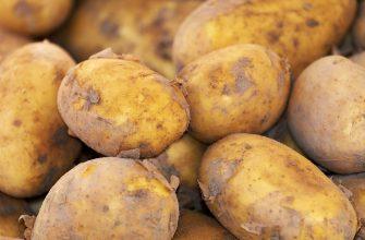 Картофеля посадят больше