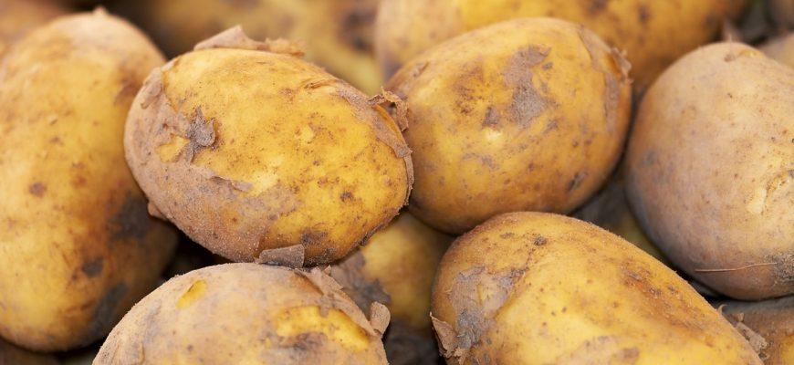 В Казахстане картофель будет золотым