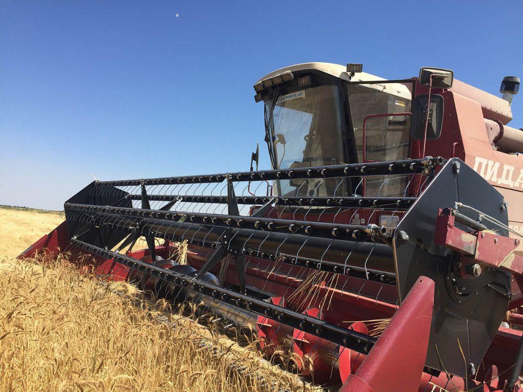 Из-за жаркого лета с редкими дождями судьба урожая еще не определилась